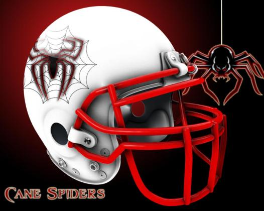 Cane Spiders